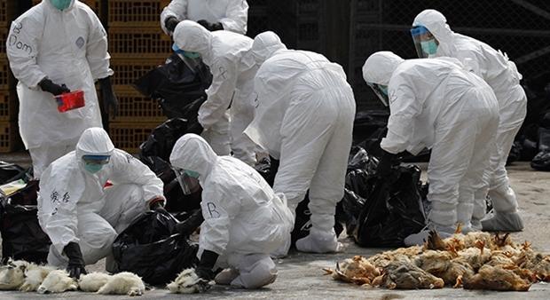 گزارش، واکسن فراوری داخل تا 6 ماه آینده بین مرغداران عرضه می گردد، توصیه های مهم برای پیشگیری از آنفلوانزای حاد پرندگان